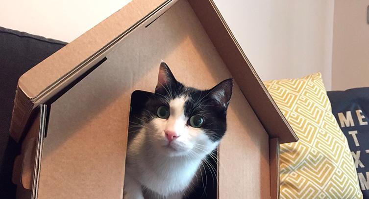 jouets en carton pour chats selfpackaging blog. Black Bedroom Furniture Sets. Home Design Ideas