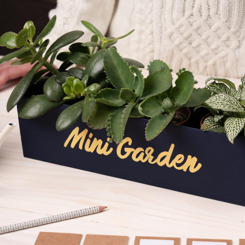 Mini jardin recyclé